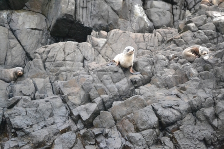 Seal, photo by Ruby